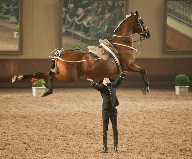 caballo-jinete