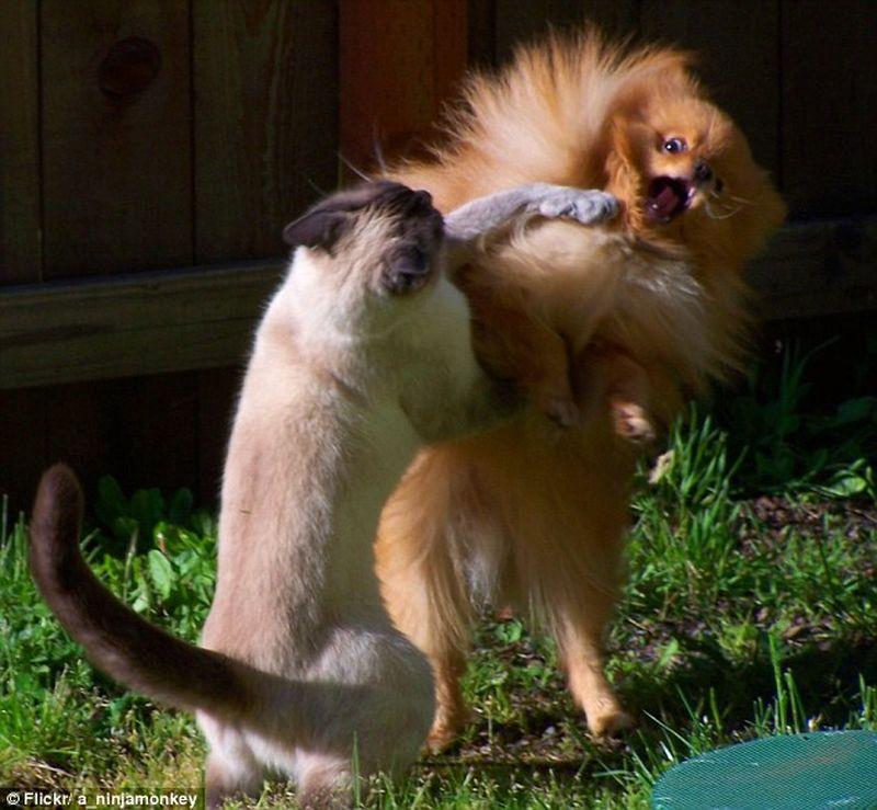 pelea-gato-perro