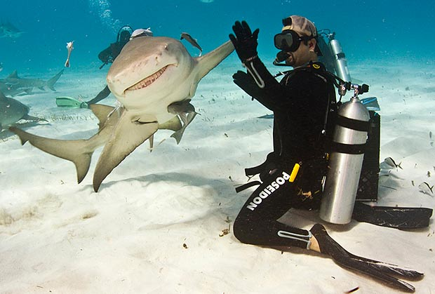 tiburon-hi5-buzo